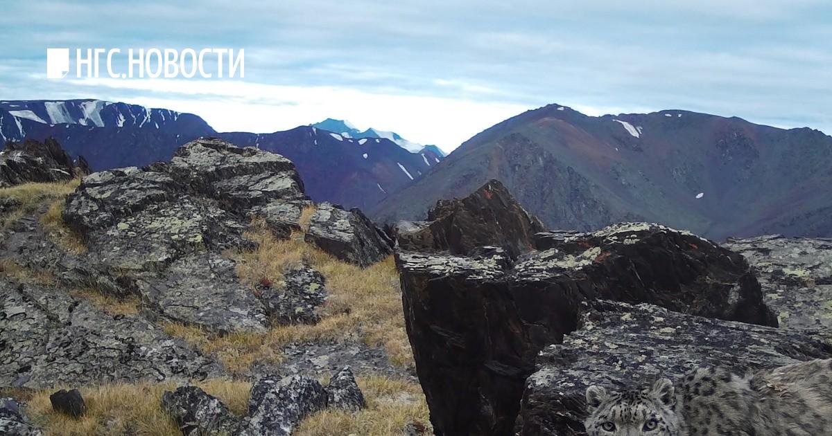 Алтайский заповедник Общее  Алтайский биосферный заповедник